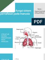 Struktur Dan Fungsi Sistem Pernafasan Pada Manusia (Inayah Titip)