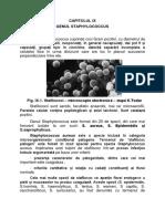 Parvobacterii