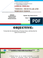 13. Types of Tissues Muscular and Nervous Tissue