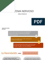 Sistema Nervioso Embrionario