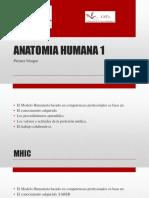 ANATOMIA Definiciones 2