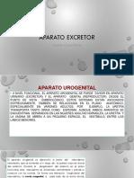 APARATO EXCRETOR EMBRIOLOGIA