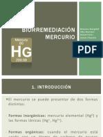Bioremediaicón Mercurio