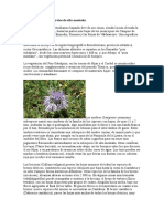 Flora Campurriana