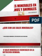 Sales Minerales en Humanos y Animales