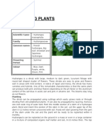 Details of Ornamental Plants