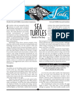 Sea Stats - Sea Turtles