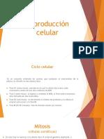 Reproducción celular.pptx