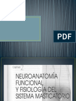 Sistema neuromuscular