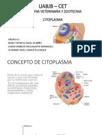 CITOPLASMA.pptx