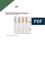 Anatomi gigi.docx