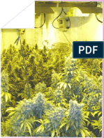 Marijuana Horticulture - 2