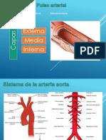 Pulso Arterial (Semio)