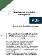 cultivarea PMG
