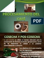 procesamiento del cafe en Guatemala