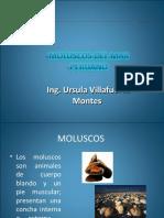 Moluscosdelmarperuano 150125232429 Conversion Gate02