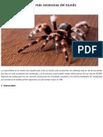 Conoce a Las 3 Arañas Más Venenosas Del Mundo _ Diario Los Tuxtlas