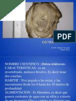 ostraibrahim-120207143817-phpapp01