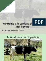 cavidad abdominal del bovino