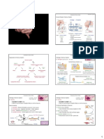 Unit 04 - Central Nervous System.pdf