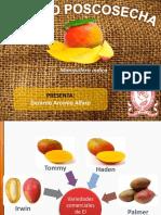 Poscosecha Mango