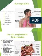 aparato_respiratorio farmaco