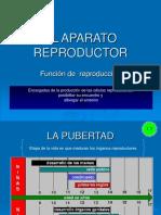 Aparato-reproductor