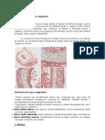 Histología de Los Vasos Sanguíneos