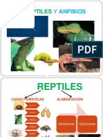 clasificacindelosreptilesyanfibios-131008053644-phpapp02