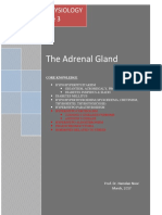 3. the Adrenal Gland