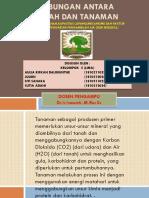 Hubungan Antara Tanah Dan Tanaman Kel.5