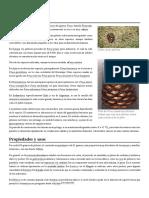 Piñón.pdf