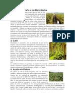 3 Cultivos  de Guatemala
