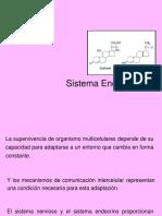 23. Sistema Endocrino