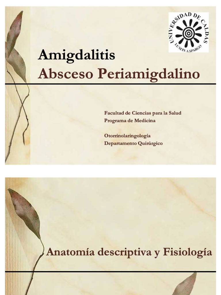 Lujo La Anatomía Y La Fisiología De Las Amígdalas Cresta - Imágenes ...