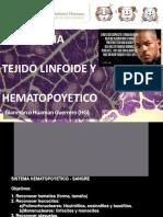 6.- Tejido Hematopoyetico Y LINFOIDE
