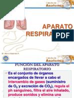 Sistema Respiratorio (1)