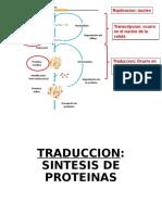 Sesion 3 Sintesis de Proteinas