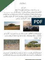 Dasht- e- Africa