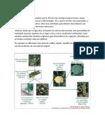 seleccion en mejoramiento vegetal.docx