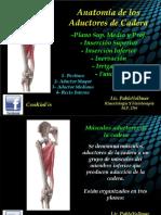 Anatomía Músculos Aductores