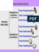 CLASES+DE+MOLUSCOS
