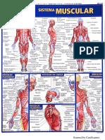 Resumo de Anatomia