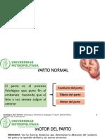 Atencion Al Parto Normal Nuevas Diapos
