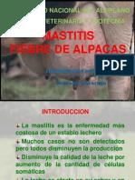 7 Mastitis Fiebre Alpacas