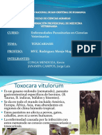 toxocariasis.pptx