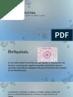 Ehrlichia canis.pdf