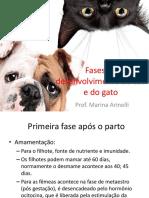 Fases de Desenvolvimento Do Cão e Do Gato