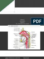 Css -Anatomi Leher