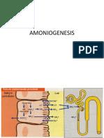 Amoniogénesis
